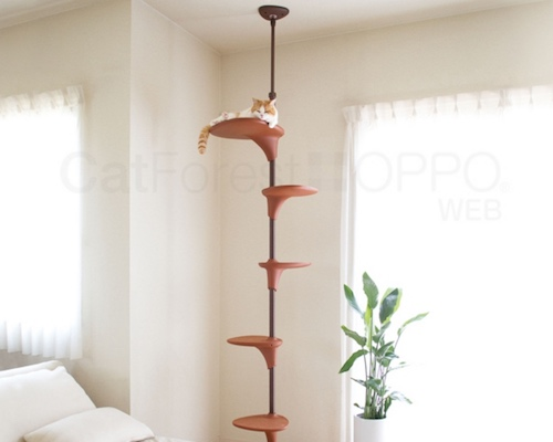 Cat Forest Climbing Tree