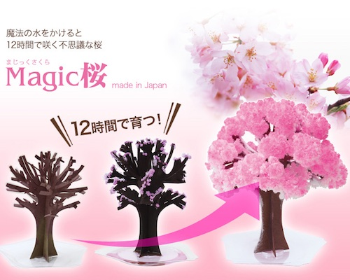 Magic Sakura Home Cherry Blossom Set of 3