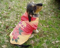 Natural Washi Dog T-Shirt