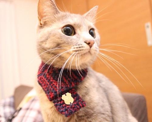 Trending Japanese Pet Products  b29ba539b9e1