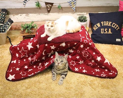 Necos Cat Hats World Traveler (8 Pack). € 70. Fruit Tart Cat Bed. Fruit  Tart Cat Bed. € 107. Far-Infrared Kotatsu Heated Table for Pets 2ce7dcc70e5b