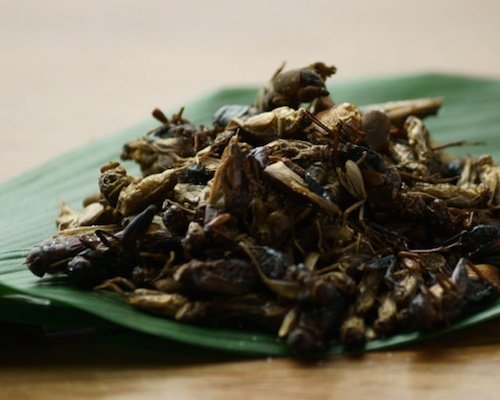 Takeo Tokyo Edible Orthoptera Insects Mix Snack
