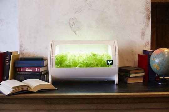 foop Lite Hydroponic Grow Box