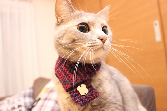 Neko Muffler Knitted Cat Scarf