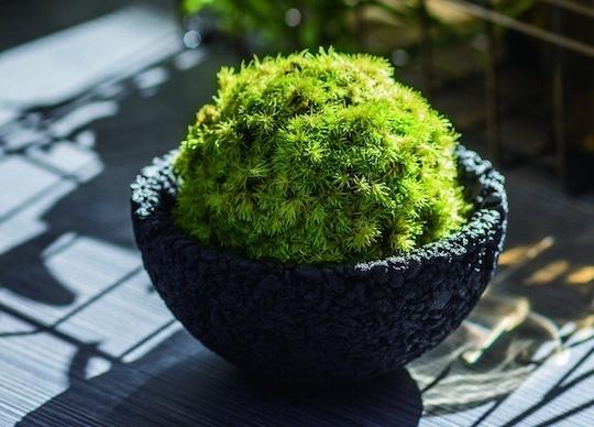 Eco Pochi Kokedama Moss Ball Pot