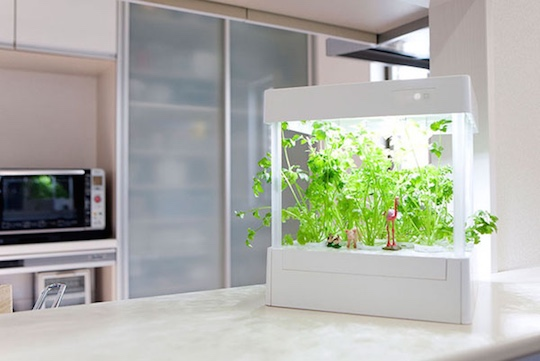 Japan Trend Shop Itplanter Hydroponic Grow Box