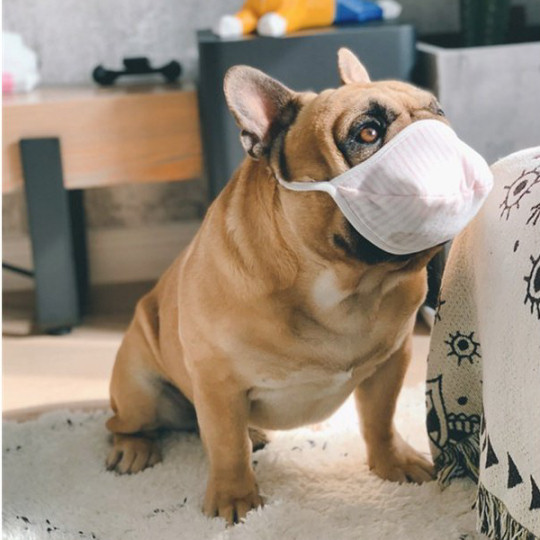 Wan-chan Dog Face Mask