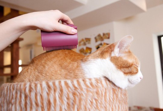 Oppo Groomo Cat Brush