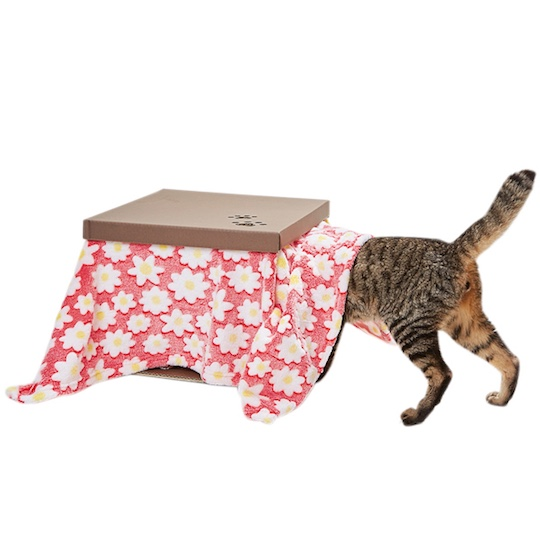 Cat Kotatsu Cardboard House