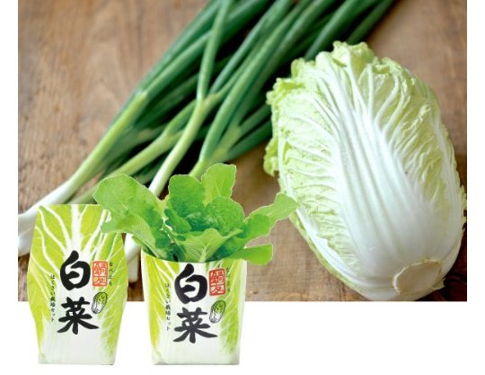 Nabetomo Hakusai Japanese Cabbage