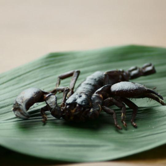 Takeo Tokyo Edible Black Scorpion