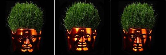 Buddha Hair Salon Flower Pot Small