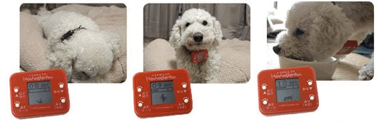 Dog Pedometer from Takara Tomy